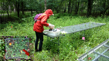 sampling nematodes at Mountain Lake Biological Station